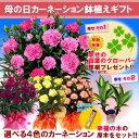 【母の日ギフト】花色選べる特選カーネーション5号鉢植ギフト
