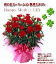 【母の日限定】赤カーネーション鉢植えと幸福の木のセット