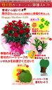 【送料無料母の日のプレンゼントに】四葉のクローバーの球根&選べる幸せ特典サービス【fgp48_02】【母の日ギフト】赤カーネーション鉢植えギフト