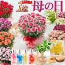 \まだ間に合う/ 母の日 プレゼント カーネーション 花色おまかせ鉢植え ギフト とおまかせ幸せ特典