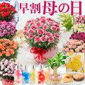 母の日 プレゼント カーネーション 鉢植え 早割 ギフト 選べる10種の花色 赤 ピンク オレンジ パー...