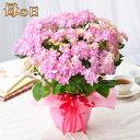 母の日 プレゼント アジサイ 花 ギフト 鉢植え あじさい 紫陽花 ピンクエトワール ダンスパーティー5号鉢植え 特典付き