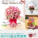 早期予約特典!ポイント10倍吉本花城園 季節の鉢花C 選べるフラワーギフト 母の日 花のプレゼント !送料無料のフラワーギフト2014