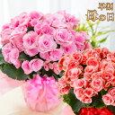 母の日 プレゼント 花 ギフト 鉢植え リーガースベゴニア 花色選べる 特典付き