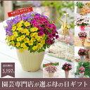 園芸専門店が選ぶ母の日ギフト・アジサイやバラの花などの季節の鉢花ギフトA