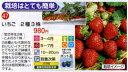 栽培はとても簡単【47】いちご 2種3株