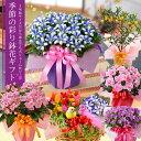 敬老の日ギフト●キレイなお花のプレゼントが送料無料♪育てる楽しみをお届けできる 敬老の日 ギフト