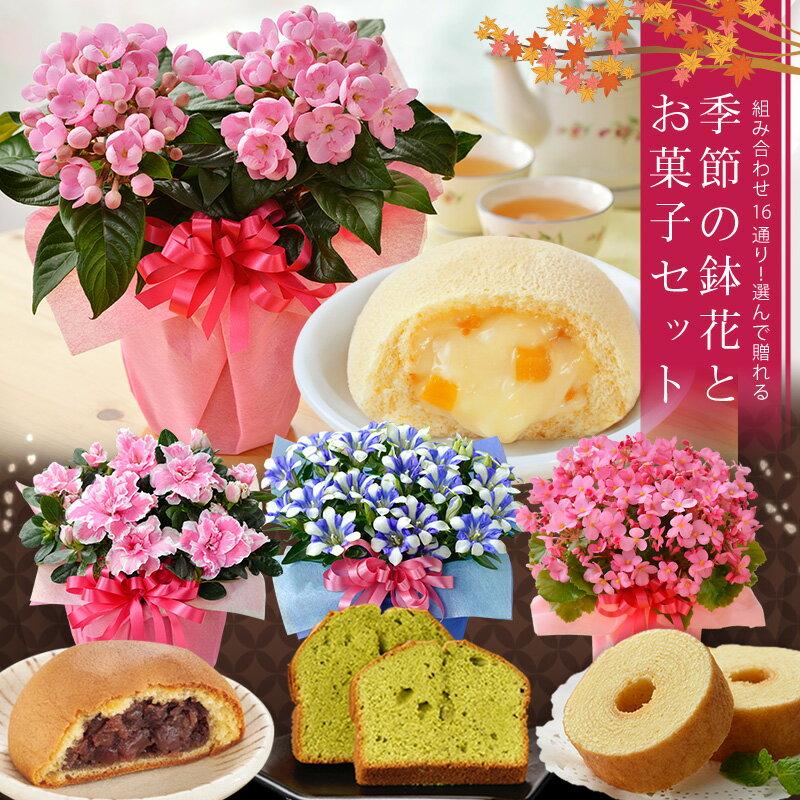 敬老の日ギフト  送料無料!選べる季節の鉢花(リンドウ、におい桜、ベゴニア、アザレア)とスイーツセット(バウムクーヘン、抹茶ケーキ、月まる、月でひろった卵)