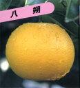 Kazyu_kankitu030
