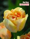 Tulipn01