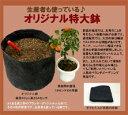 家庭菜園セット 土・鉢コミコミセット 布鉢、土1、土壌改良材1