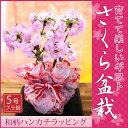 和柄特別ラッピング仕様!桜盆栽鉢植えギフト