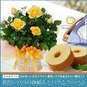 2016【父の日ギフト】幸せの黄色いバラ鉢植えとミニバームクーヘンセット05P27May16