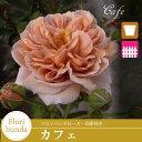 花色の変化が美しい 何本でも同梱可。1万円以上送料無料!