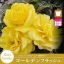 Goldenflash800