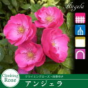 Rose-sato01_1
