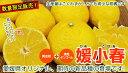 媛小春(ひめこはる)約3kg