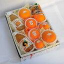 【送料無料】柑橘よくばりセットB