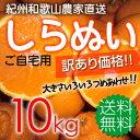 紀州和歌山 児玉農園の果汁たっぷり 甘熟濃厚しらぬい(デコポンと同品種)家庭用約10kg(残りL〜Mがほとんどです)