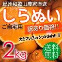紀州和歌山 児玉農園の果汁たっぷり 甘熟濃厚しらぬい(デコポンと同品種)家庭用約2kg(残りL〜Mがほとんどです)