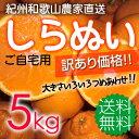 【送料無料】紀州和歌山 児玉農園の果汁たっぷり 甘熟濃厚しらぬい(デコポンと同品種)家庭用5kg≪現