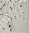 高級色紙「桜」文魚(色紙絵)送料無料