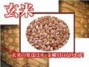 【ポイント10倍】【送料無料】広島県産ヒノヒカリ 30kg(玄米) 特A米【28年産1等米】
