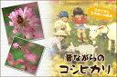 【ポイント20倍】【送料無料】広島県産コシヒカリ 30kg玄米(5kg×6袋)無地袋【28年産1等米