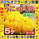 【クーポン使用で20%オフ】 むらさきうに うに 貝焼き 【 海外産 ウニの貝焼き 】 焼