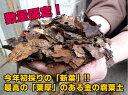 『放射能測定済み』 安心安全の日本産落葉使用! 金の腐葉土【50L】【RCP】