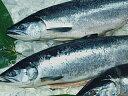 極上甘塩紅鮭約1.5kg