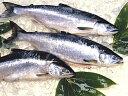 極上甘塩紅鮭約2.1kg【10P03Dec16】