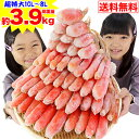 【クーポン併用でさらに1,000円OFF】超特大10L〜8L...