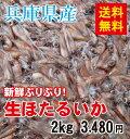 【送料無料】兵庫県産 生ほたるいか(新物)2kg(250g×8パック)【生冷凍】《ほたるい