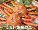 【19-042】活 黄金ガニ (約1kg前後)【香住かに 香...