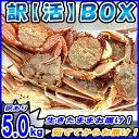 送料無料 訳あり 【活】 カニ 5.0kg