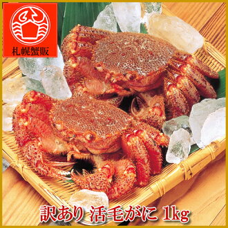 Translation and Hokkaido industrial activity horsehair 1 kg BOX before and after about three or four tail with crabs / crab / crab / hair / horsehair / live / live /'s barnyacauda / Souvenirs / Gift / 05P07Feb16