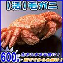 毛ガニ 600g【カニ】【かに】【蟹】【毛ガニ】【北海道】【楽ギフ_のし】