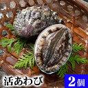 北海道 活蝦夷鮑 2個入りで合計200g前後 えぞアワビが活きたままで届きます。活あわびだからこそお刺身、肝醤油、肝刺し、水貝、煮物、鉄板であわびステーキで食べられます。北海道グルメ食品 魚介類・シーフード 貝 アワビ