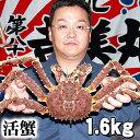 【活タラバガニ】活タラバ蟹(中サイズ)プリップリもちもちのたらば蟹の身は甘くておいしいですよ♪たらばがにの身がギッシリ詰まっています!活本タラバガニ メス 1.6〜1.8kg前後 活カニお取り寄せ 茹でたての たらばがに の身は甘くておいしい!海鮮グルメ