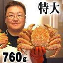 特大の毛蟹 760〜820g ボイル冷凍 北海道産の毛ガニで...