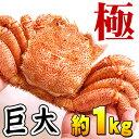 (巨大サイズ) 北海道産 活毛蟹 極(きわみ) 1kg前後 毛ガニの美味しさを味わうなら、未冷凍の活け活蟹。茹でたて毛がにの醍醐味でもあるカニ味噌。活毛ガニならかにのお刺身、焼きガニが食べられます。カニ通販、北海道グルメ食品 魚介類・シーフード カニ 毛ガニ 活