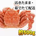 北海道産 活毛蟹 500g前後 中型 毛ガニの美味しさを味わ...