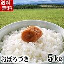 (送料無料)令和元年度 新米 北海道産米 おぼろづき 5kg 白米、精米 もっちりした食感のお米。柔らかい食感と強い粘りが特徴のおぼろ..