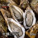 牡蠣 かき 北海道 厚岸 殻付き 活牡蠣 3Lサイズ(約10個) 生牡蠣 冷蔵 マルえもん まるえもん ギフト 贈答 父の日 母の日 内祝い