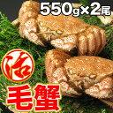 毛ガニ 活毛ガニ 2尾セット (550g前後×2) 北海道近海産 冷蔵 かに 毛蟹 活かに 活蟹 かにみそ 刺身用にも最適 ギフト 贈答 父の日 母の日