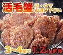 毛ガニ 活毛ガニ 3〜4尾セット (1.2kg前後) 北海道近海産 冷蔵 かに 毛蟹 活かに 活蟹 かにみそ 刺身用にも最適 ギフト 贈答 父の日 母の日
