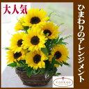 送料無料 新鮮な花をお届けします。 ひまわりだけのアレンジメント 向日葵が大好きな人へのフラワーギフト360度どこから見てもひまわりのアレンジメント 送料無料 花 ギフト フラワーギフト お祝い 結婚祝い 記念日 誕生日 母の日 お見舞い 敬老の日