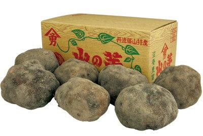 丹波篠山産 山の芋 秀品3kg箱入り