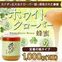 【カナダ産】ホワイトクローバー蜂蜜 1000g蜂蜜専門店 かの蜂
